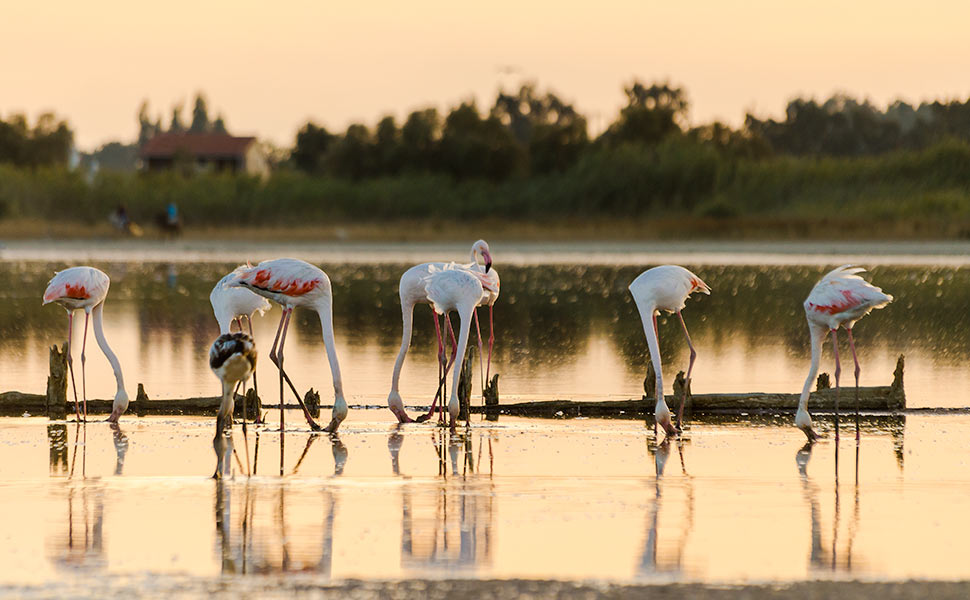 Alykes - Flamingos Wetlands area (salt lake) in Tigaki Kos
