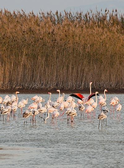 Psalidi wetlands, Kos